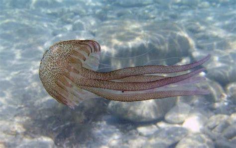 ¿Hay en el mar Mediterráneo fauna potencialmente peligrosa?