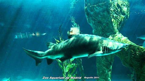HD   Tiburones en el Zoo Aquarium de Madrid   YouTube