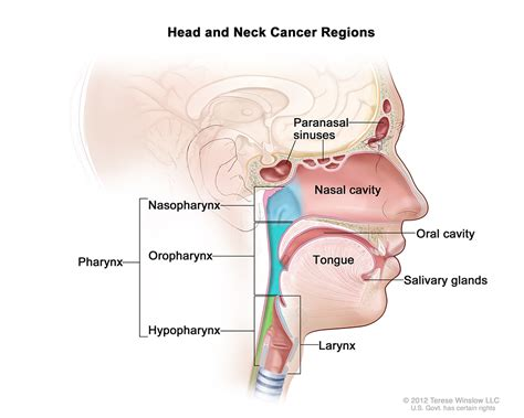 Head and Neck Cancers | CDC