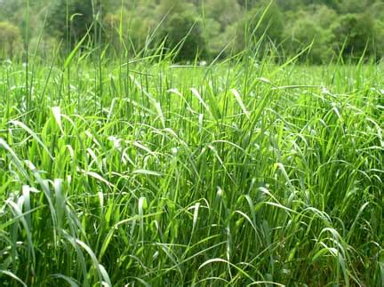 Health Benefits of Oat Grass That Will Surprise You