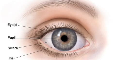 Health Problem & Solutions: Structure of the Eye