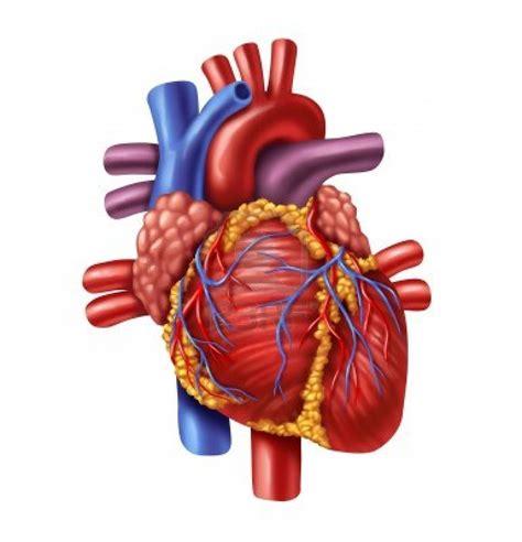 Heart | A year in Mbarara