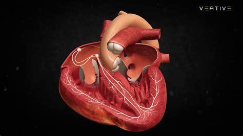 Heart Anatomy: Learn How Human Heart Works | Veative Labs ...