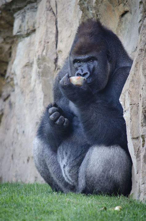 «Helados  animales  de bienvenida a julio en BIOPARC ...