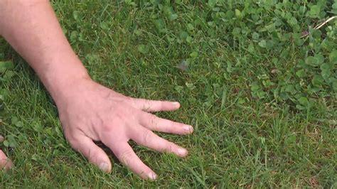 Herbicidas para el césped y el jardín   Césped
