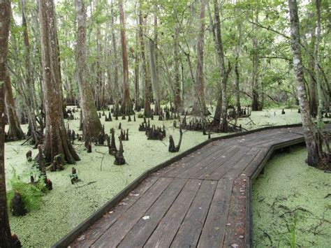 Here Are 11 Awesome Thing You Can Do In Louisiana ...