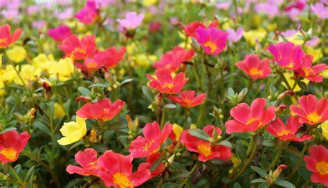 Hermosas plantas resistentes a la sequía