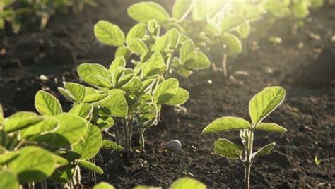 Herramientas que potencian el cultivo de soja, desde la ...