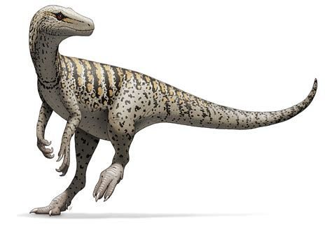 Herrerasaurus — Wikipédia