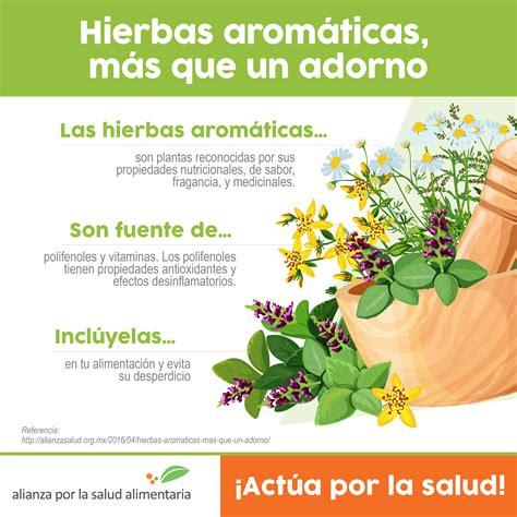 Hierbas aromáticas a tu comida: más que un adorno ...
