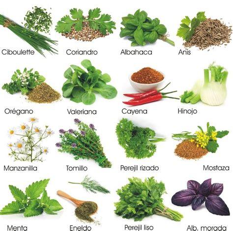 hierbas aromaticas   Buscar con Google | Hierbas, Hierbas ...