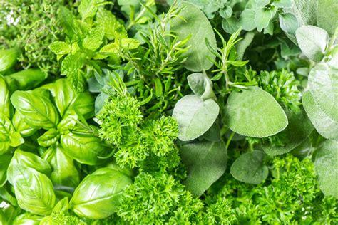 Hierbas aromáticas: cinco variedades para cultivar y ...