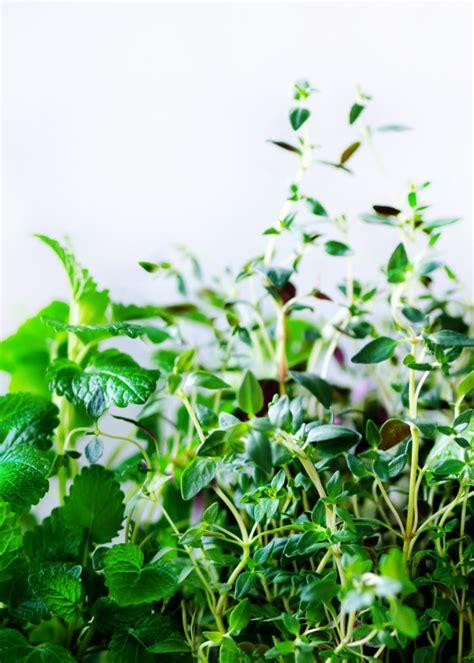 Hierbas aromáticas frescas verdes   melisa, menta, tomillo ...