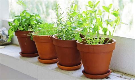 hierbas aromáticas   Gastronosfera