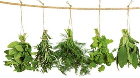 Hierbas aromáticas imprescindibles en la cocina ...
