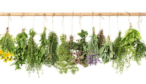 Hierbas aromáticas, menos sal y más sabor en el plato ...
