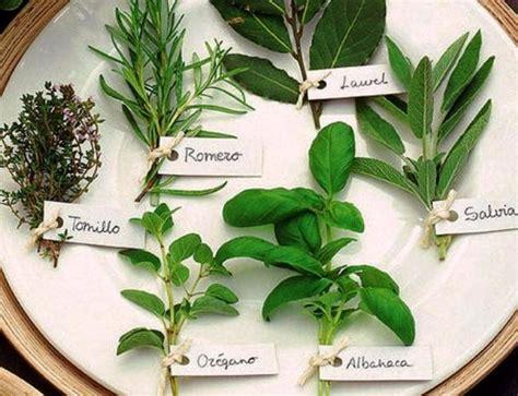 Hierbas Aromáticas  plantas    S/ 8,00 en Mercado Libre