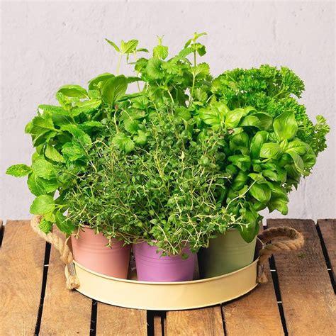Hierbas aromáticas – Cocinas con pequeños cultivos llenos ...