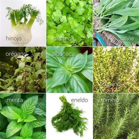 Hierbas aromáticas, sus usos en la cocina   Divina Cocina