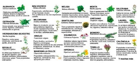 Hierbas Aromáticas: Una Guía Para El Cultivo Y Consejos ...