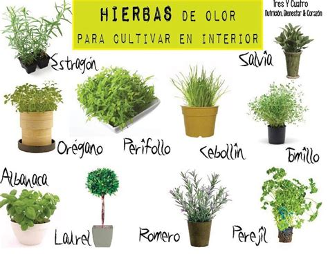 Hierbas con olor para cultivar en el interior ...