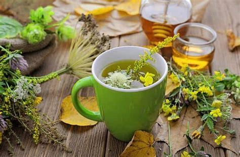 Hierbas medicinales: qué dolencias alivian y cómo usarlas ...
