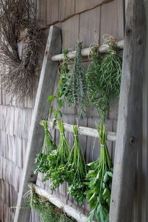 Hierbas, plantas y raíces mágicas   Mi nube mágica ...