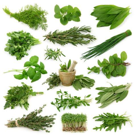 Hierbas y plantas aromáticas y medicinales   ElBlogVerde.com