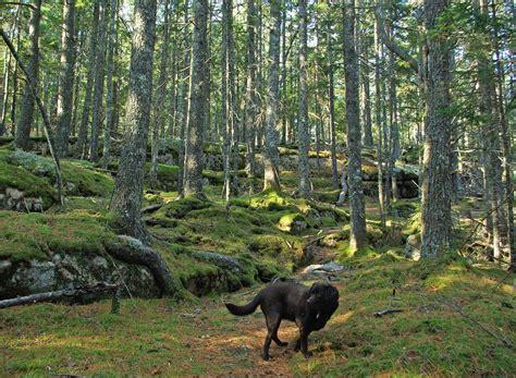 Hiking And Trails Near Me   Sabis Bulldog Athletics