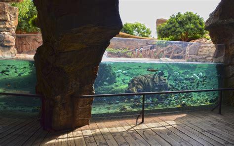 Hipopótamo en la cueva de Kitum de BIOPARC Valencia ...