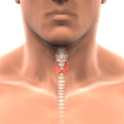 Hipotiroidismo en hombres: síntomas, causas y tratamiento ...