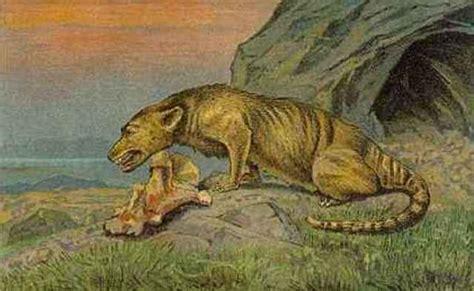 Hippo Evolution timeline | Timetoast timelines