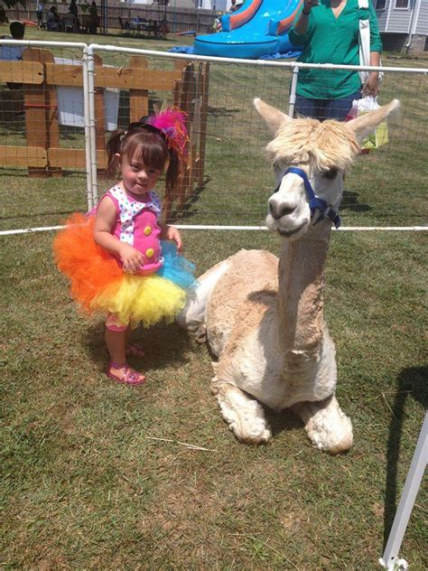 Hire Molly s Ark Mobile Petting Zoo & Pony/Horse Rides ...
