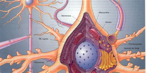 Historia de la Biología Celular: Biología Celular