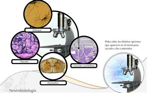 Historia de la célula | Biologia celular