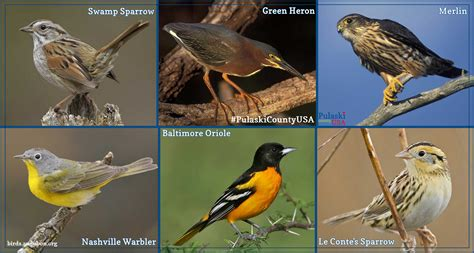 Hitchhikers Guide To Birding In Pulaski County | Pulaski ...