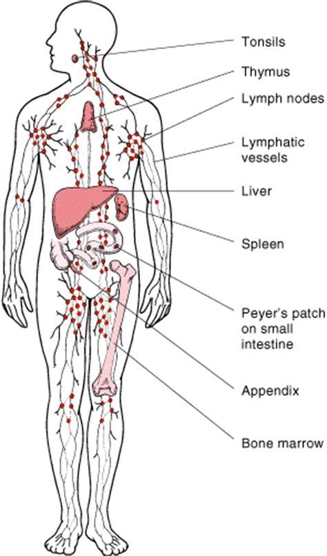 Hodgkin s Lymphoma   Physiopedia