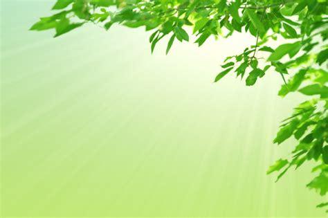 Hojas verdes y sol. fondo verde en colores pastel de la ...