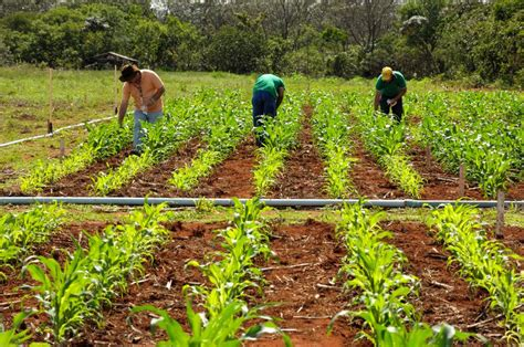 HOJE RURAL. Ministério da Agricultura fecha 26 Unidades ...