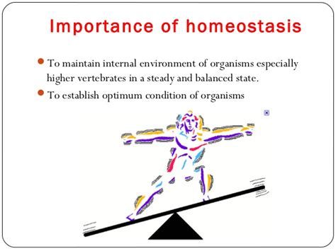 HOMEOSTASIS AND SECOND BRAIN. – Scientific Naturopathy by ...