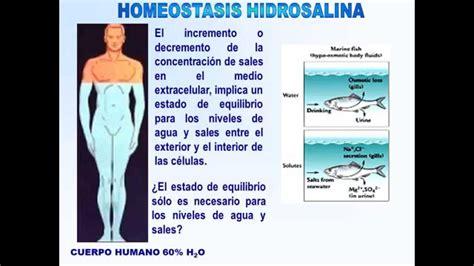 HOMEOSTASIS   YouTube