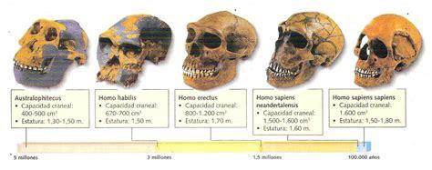 hominizacion.jpg  1272×504  | Evolución humana, Evolucion ...