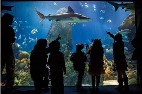 Honor: Lisbon Oceanarium named best in the word   Portugal ...