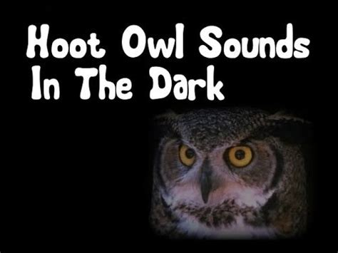 Hoot Owl Sounds in the Dark   YouTube