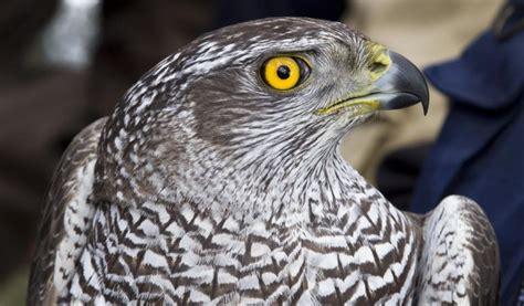 Hora de participar en el III Atlas de Aves Reproductoras ...