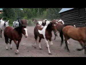 Horses Running out to Pasture