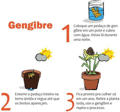 Horta em casa: 7 tipos de plantas que você pode cultivar ...