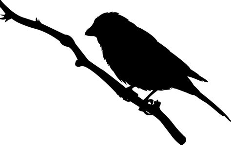 House Finch on Branch Silhouette | Free vector silhouettes
