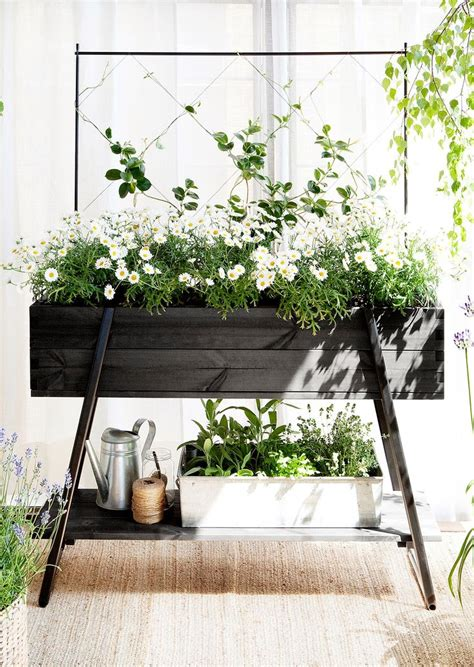 How To Choose Plants for Your Balcony   L  Essenziale