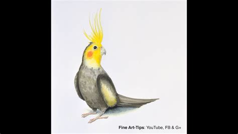 How to Draw a Cockatiel   With Winsor & Newton Pigment ...